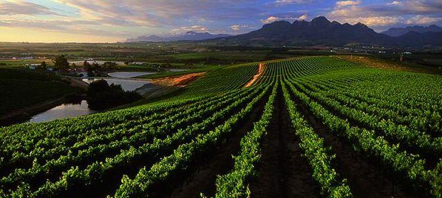 rondreis zuid-afrika stellenbosch wijngaarden