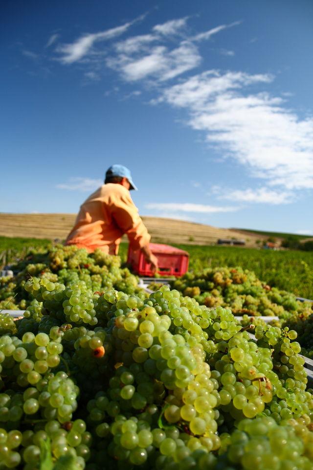 Italië wijngaard