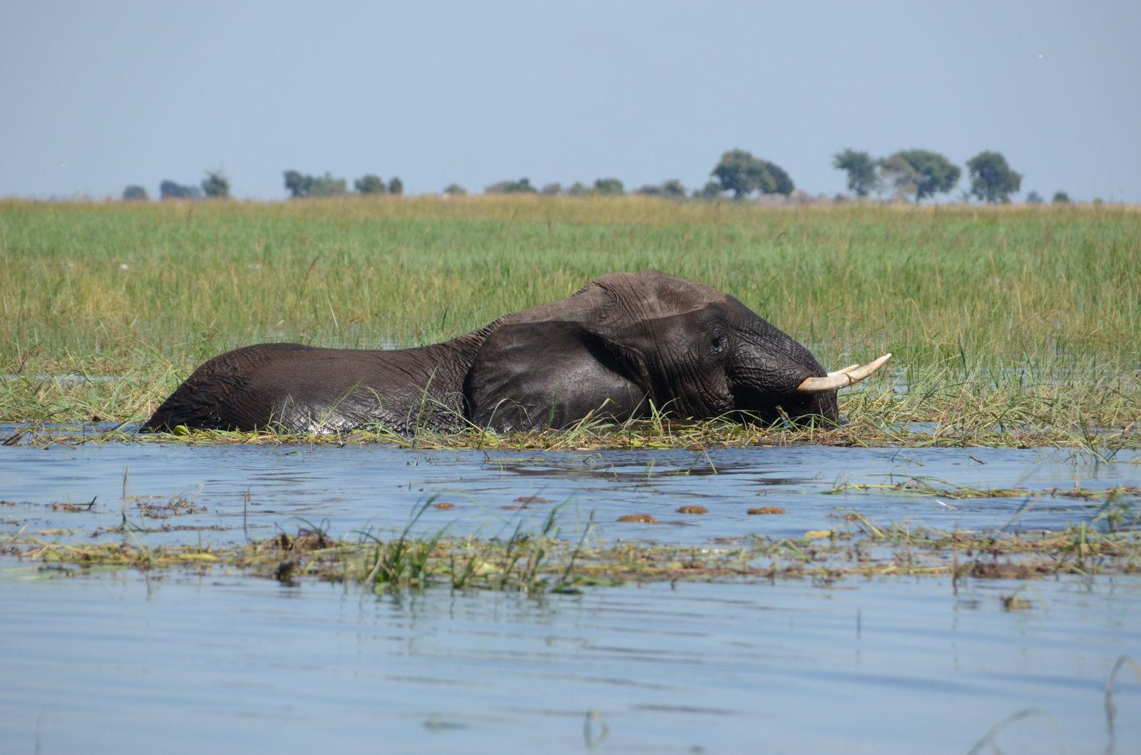 Okavango Delta in Botswana: je blijft je verwonderen | AmbianceTravel